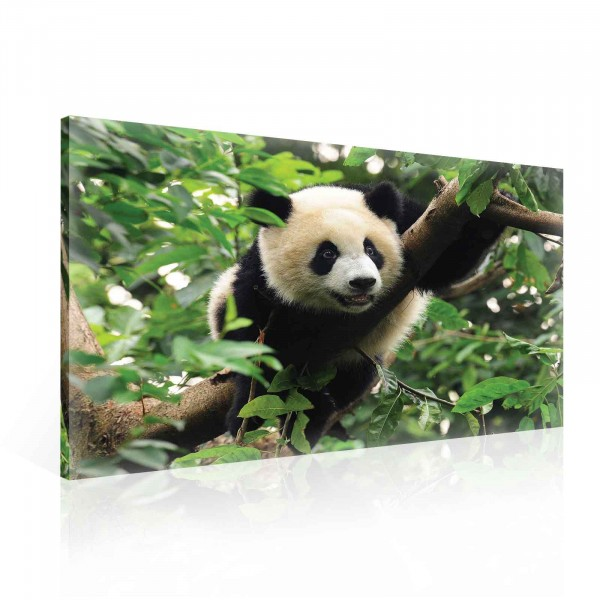 Panda Nature Canvas Print 100cm x 75cm