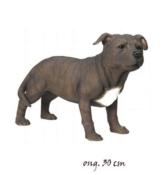 Stafford Bull Terrier grt LP09759