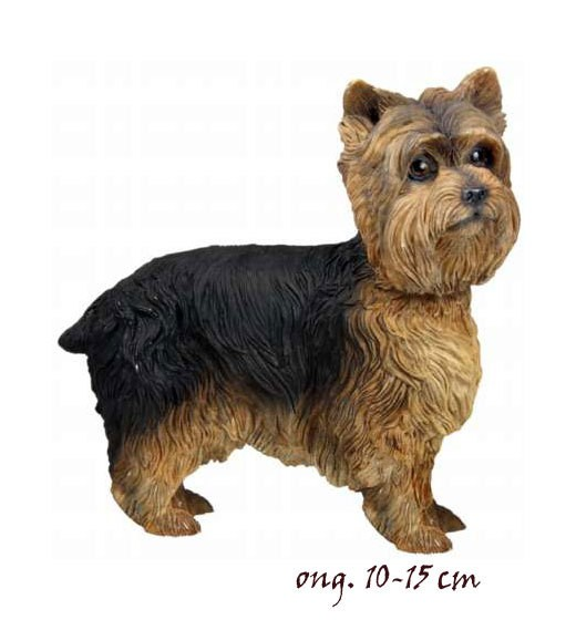 Yorkshire Terrier LP4168