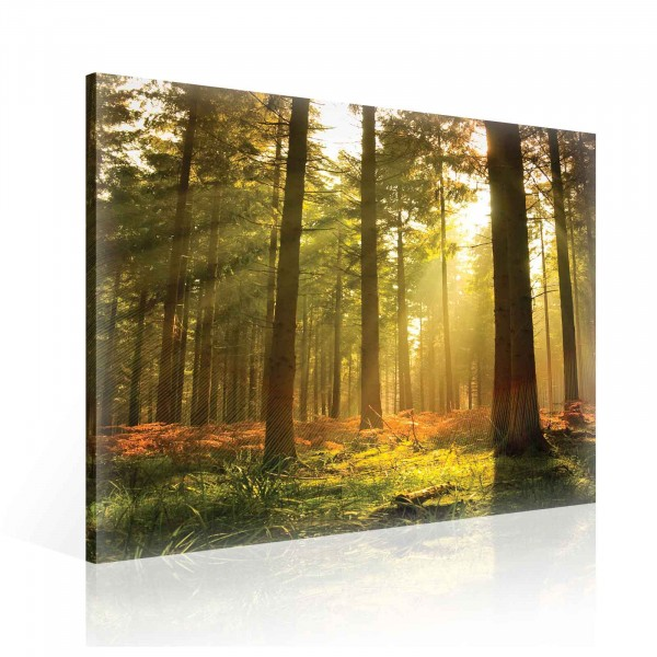 Forest Trees Beam Light Nature Canvas Print 80cm x 80cm