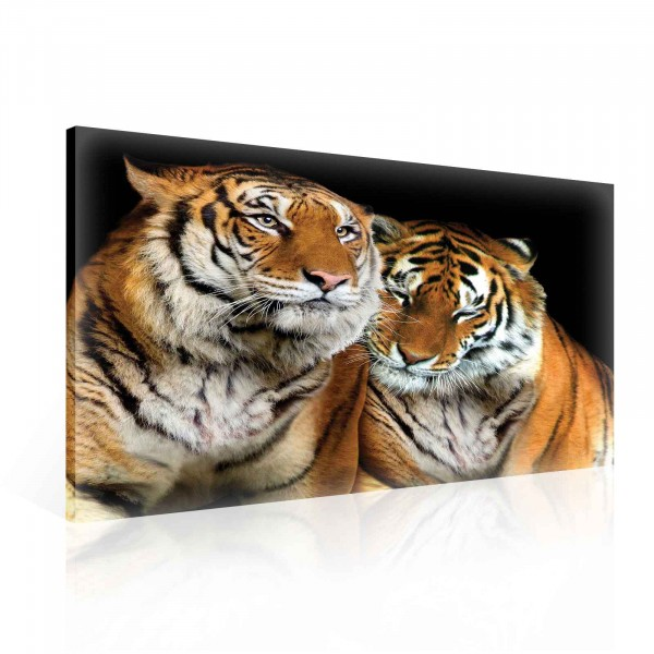 Tigers Animal Cuddle Canvas Print 100cm x 75cm