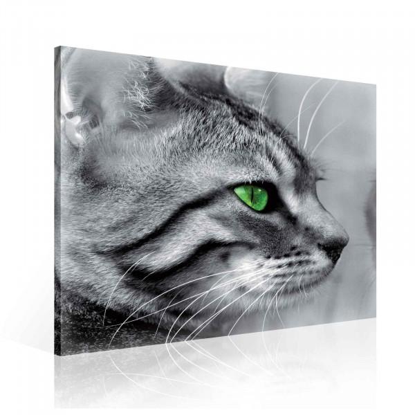 Cat Mirror Canvas Print 80cm x 80cm