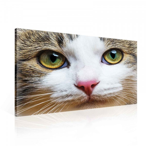 Cat Canvas Print 100cm x 75cm