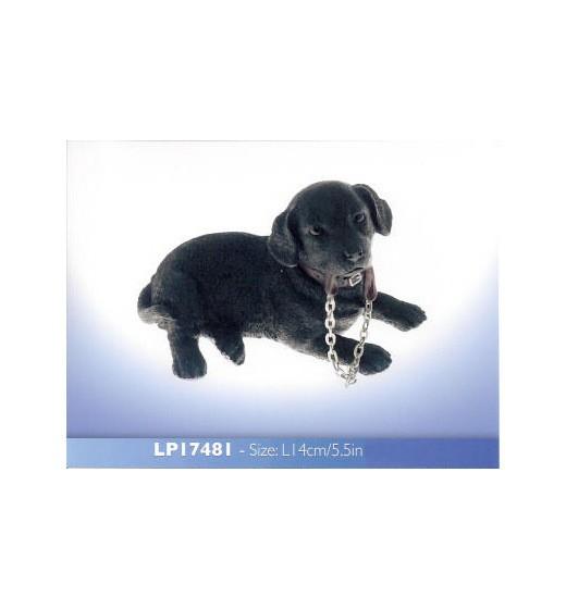 Labrador zwart LP17481
